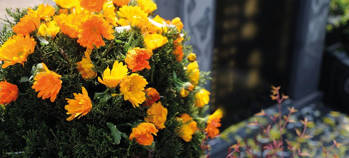 Grabpflege bei Blumen Holler: die richtige Auswahl der Pflanzen
